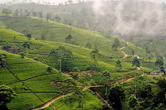 Photo n° 12 Ceylan Essentiel - Sri Lanka