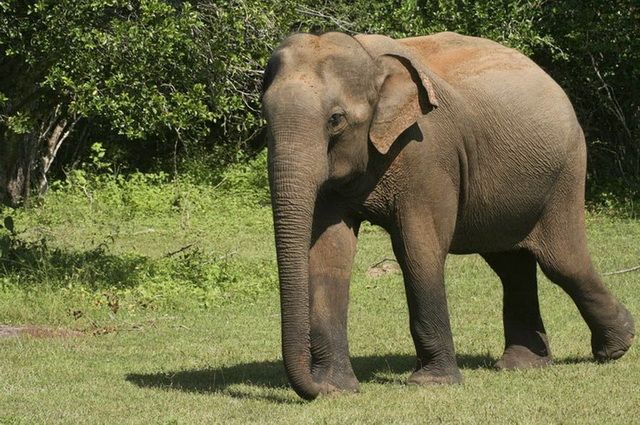 Photo n° 13 Ceylan Essentiel - Sri Lanka