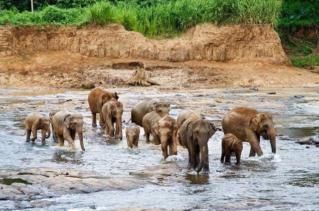 Photo n° 14 Ceylan Essentiel - Sri Lanka