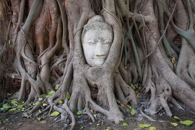 a-thailande-ayutthaya-tete-de-bouddha-1-go
