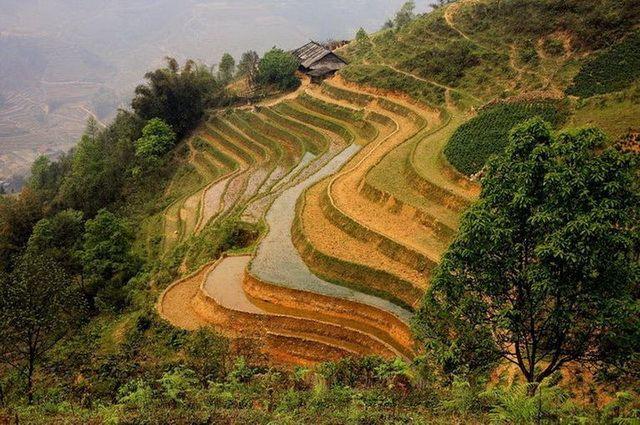 a-vietnam-sapa-rizieres-en-terrasses-8-go