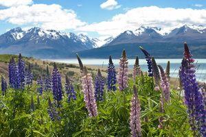 Photo n° 2 Flânerie néo-zélandaise (autotour) - Nouvelle Zélande