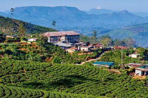 Photo n° 2 Ceylan Essentiel - Sri Lanka
