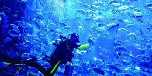 dubai-billet-aquarium-underwater-zoo-explorer-package