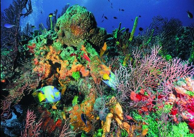 Fonds sous marins Cuba